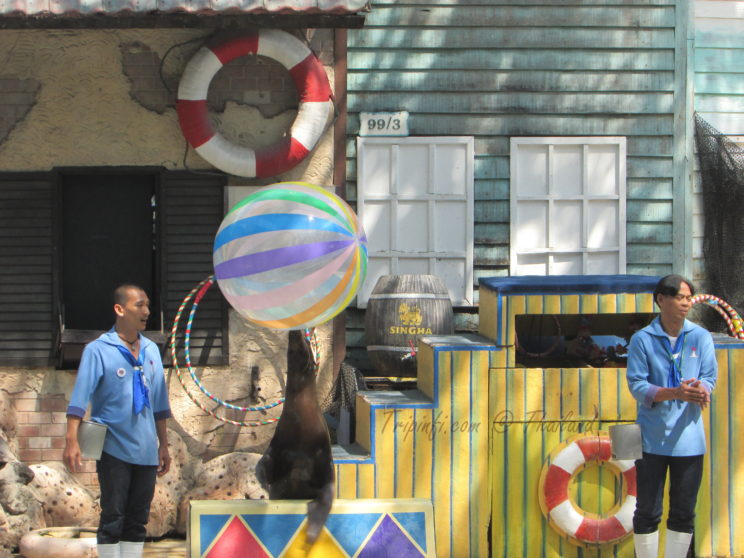 Penguine games in Bangkok (Krung Thep ), Thailand - Trip from India   Travelogue   Places to visit in Bangkok