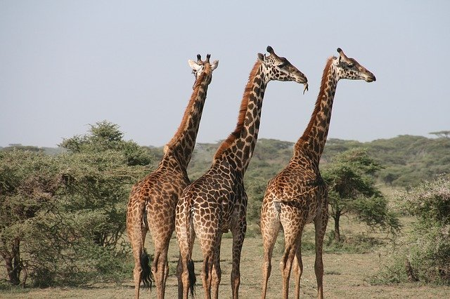 Wildlife at Tanzanian Safari