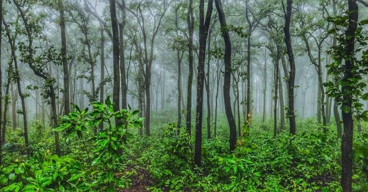 Netarhat, The Hill Station Of Jharkhand - A Complete ...
